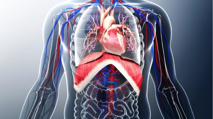 Recognise healthy body systems